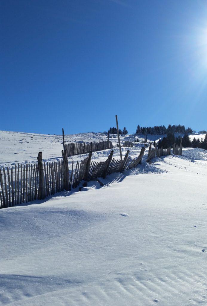 neige capucin